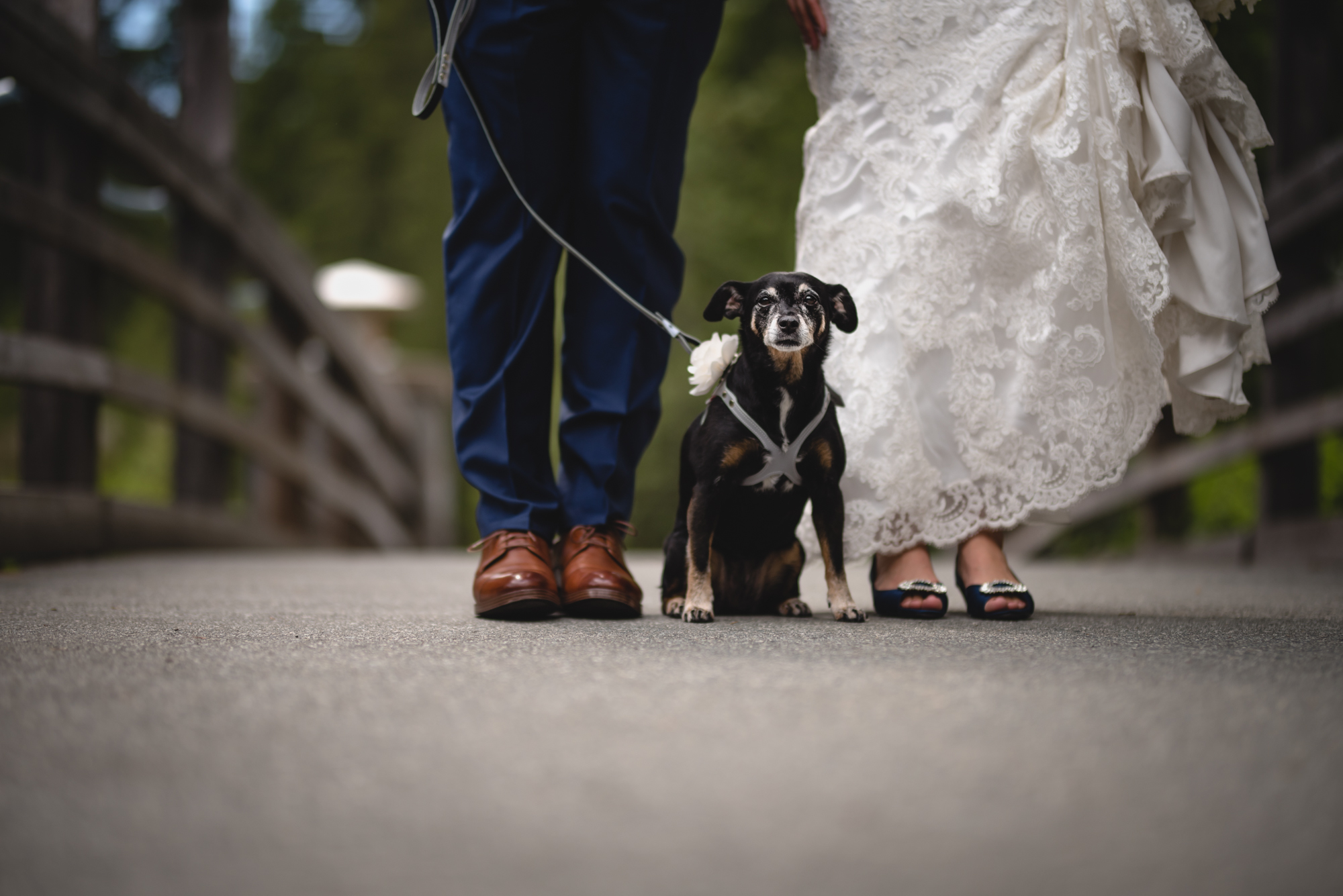 bride groom dog portrait in whistler